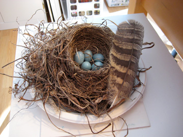 Marilyns_robins_nest_for_blog_large
