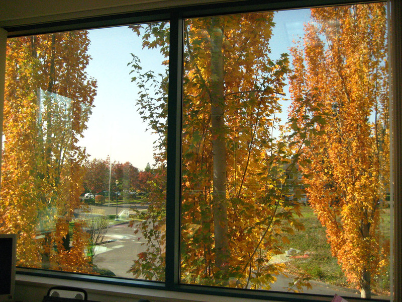 Autumn_trees_from_my_office_for_blo