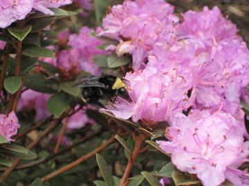 Bee_web