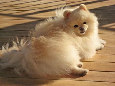 Xena sunbathing on the deck